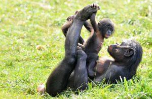 Séjour en gîtes pas cher dans la Vienne proche des parc animaliers et Zoos